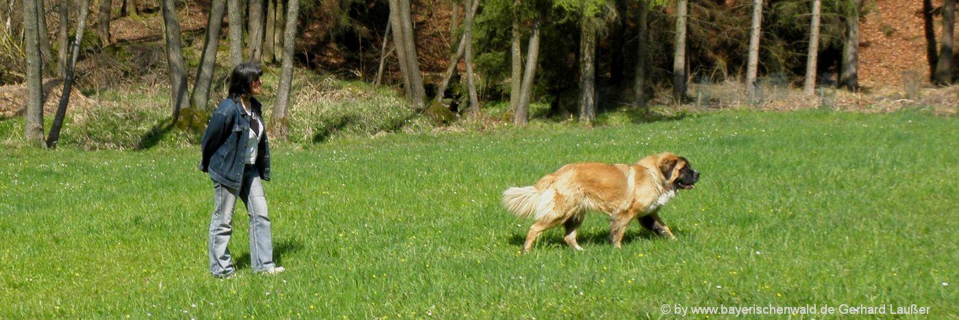 Urlaub mit Hunden in Bayern / Bayerischer Wald