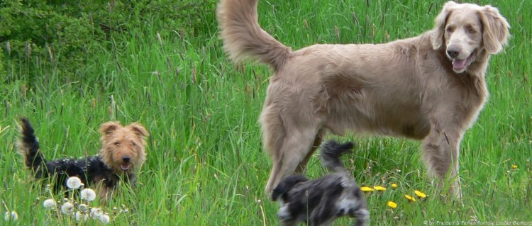 Hundehotel in Bayern Urlaub mit Hund