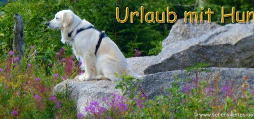 hundefreundliche-unterkunft-bayern-wandern-urlaub-mit-hunden