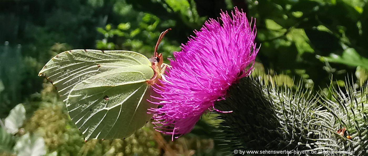 Natur Bilder aus Bayern Ausflugsziele & Sehenswürdigkeiten