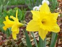 naturbilder mit blumen bluete blueten blume gelb