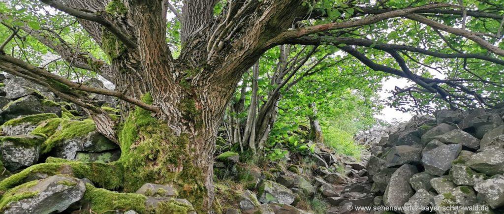 Vulkanberg im Naturpark Oberpfälzer Wald Wanderweg Rauher Kulm