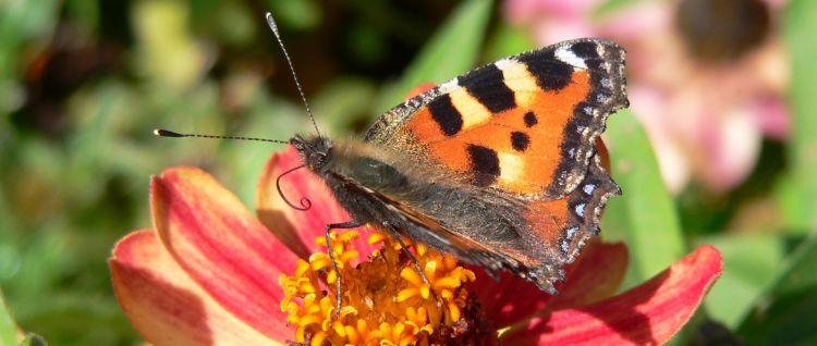 Natur entdecken - günstige Unterkünfte in Bayern
